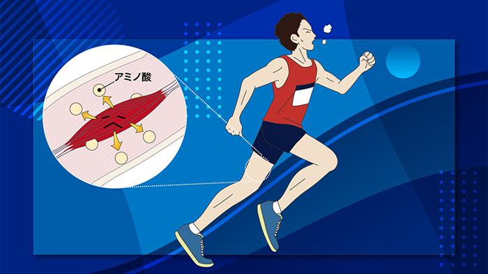 運動中に筋肉が減ってしまう!? その理由を知ればアミノ酸の必要性が理解できる